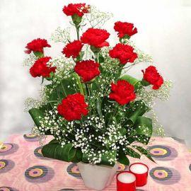 12 Red Carnations in Vase