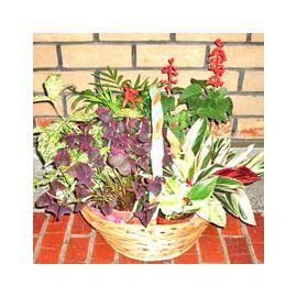 Assorted Flowering Plants For Indoor Garden