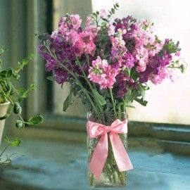 Matthiola Flowers In Glass Vase