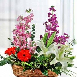 Matthiola, Lily & Gerbera Table Arrangement