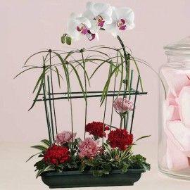 Phalaenopsis Orchids & Carnations Table Arrangement.