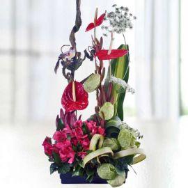 Red Anthurium & Alstroemeria Arrangement